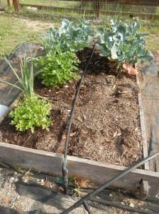 Leeks, Broccoli, Herbs