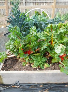 Swiss Chard, Kale, and Spinach