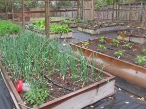 Onions, Carrots, Lettuce, Melons, Squash, Peppers