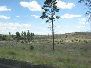 Damage from the Rodeo Chediski fire in 2002